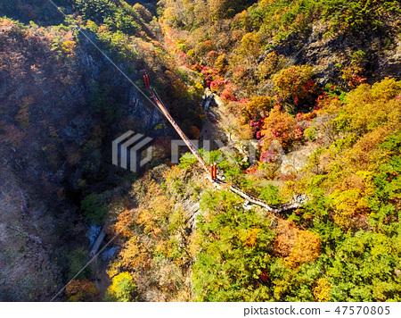전라남도 순창군 강천산군립공원 가을 단풍과 출렁다리 47570805