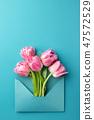 Pink tulips in envelope. 47572529