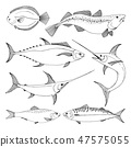Set of different sea fishes. 47575055