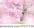温柔的春天 47577738