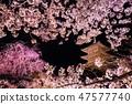 樱桃树框架 47577740