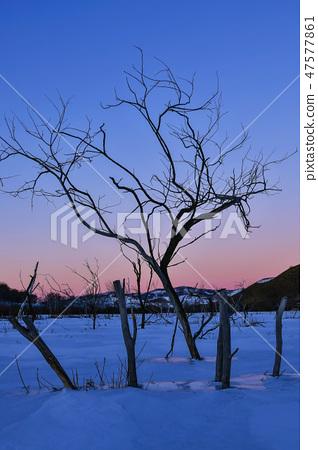 나무,빠상초원,내몽고,중국 47577861