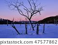 나무,빠상초원,내몽고,중국 47577862