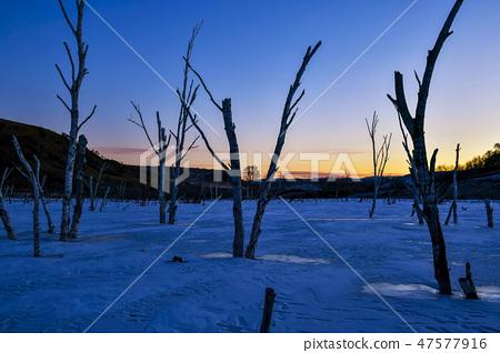 나무,빠상초원,내몽고,중국 47577916