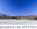 자작나무,빠상초원,내몽고,중국 47577953
