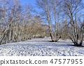 자작나무,빠상초원,내몽고,중국 47577955