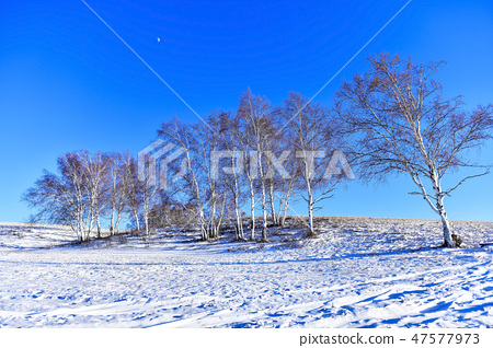 나무,빠상초원,내몽고,중국 47577973