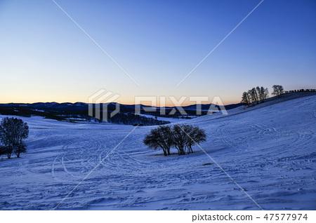 나무,빠상초원,내몽고,중국 47577974