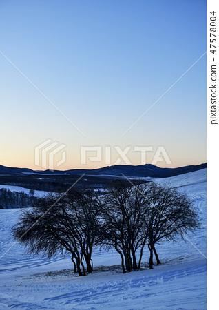 나무,빠상초원,내몽고,중국 47578004