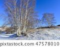 나무,빠상초원,내몽고,중국 47578010