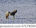 말,빠상초원,내몽고,중국 47578089