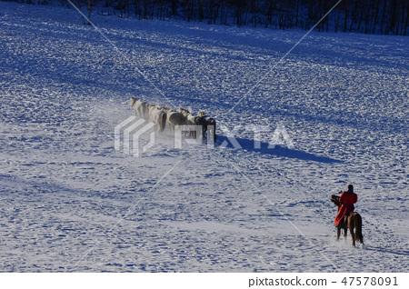 말,빠상초원,내몽고,중국 47578091