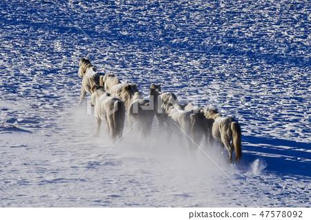 말,빠상초원,내몽고,중국 47578092