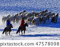 말,빠상초원,내몽고,중국 47578098