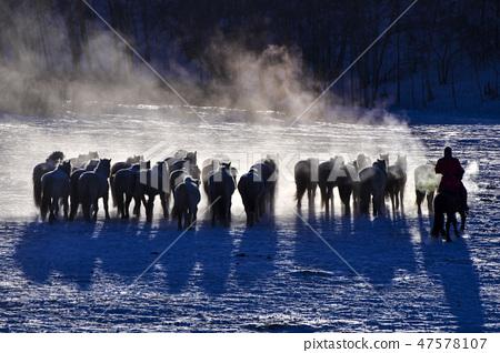 말,빠상초원,내몽고,중국 47578107