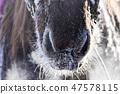 말,빠상초원,내몽고,중국 47578115