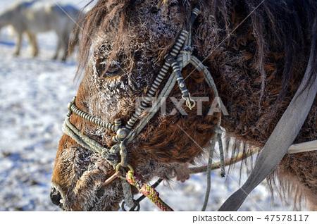 말,빠상초원,내몽고,중국 47578117