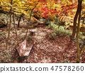 숲속 낙엽에 둘러싸인 벤치 47578260