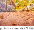강천산 군립공원의 흙길위의 단풍 47578264