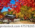 전라남도 강천산 군립공원의 강천사의 가을 47578265