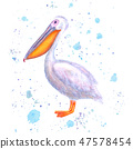 pelican, watercolor, bird 47578454