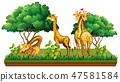 长颈鹿 动物 矢量 47581584