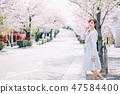 櫻花是美麗的年輕女士 47584400