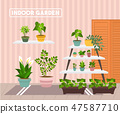 House indoor vector plants  47587710