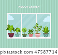 House indoor vector plants  47587714