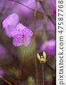 4월의꽃 47587768