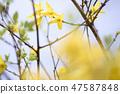 4월의꽃 47587848