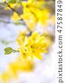 4월의꽃 47587849