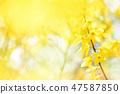 4월의꽃 47587850