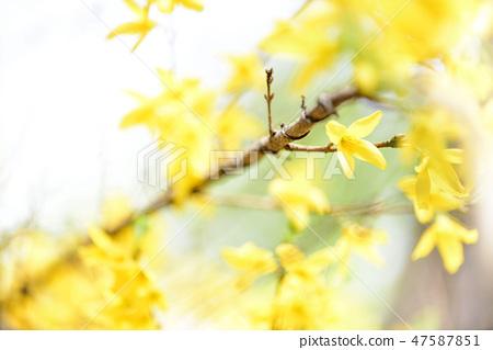 4월의꽃 47587851