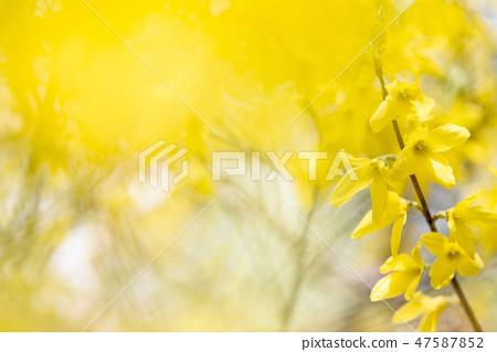 4월의꽃 47587852