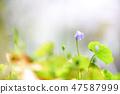4월의꽃 47587999