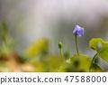 4월의꽃 47588000
