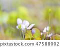 4월의꽃 47588002