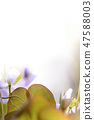 4월의꽃 47588003