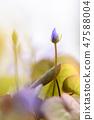 4월의꽃 47588004