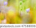 4월의꽃 47588006