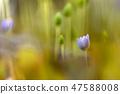 4월의꽃 47588008