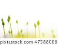 4월의꽃 47588009
