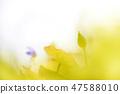 4월의꽃 47588010