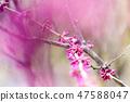 4월의꽃 47588047