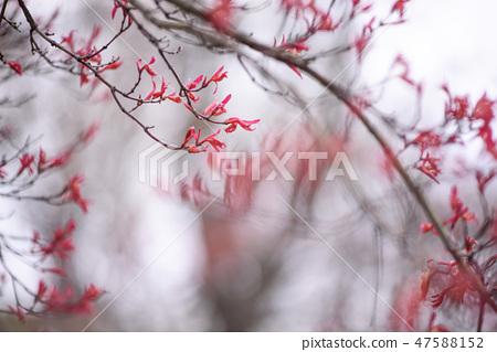 4월의꽃 47588152