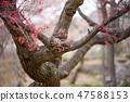 4월의꽃 47588153