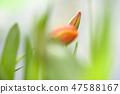 4월의꽃 47588167