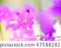 4월의꽃 47588282
