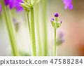 4월의꽃 47588284